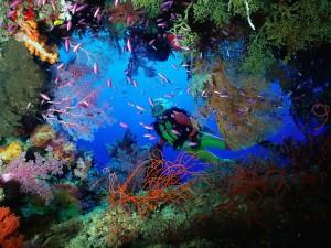 Travel World Best Diving
