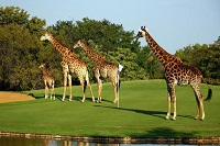 Leopard Creek golf